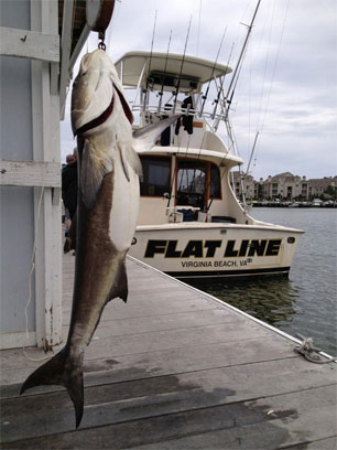 Virginia beach fishing charters aquaman sportfishing for Charter fishing virginia beach