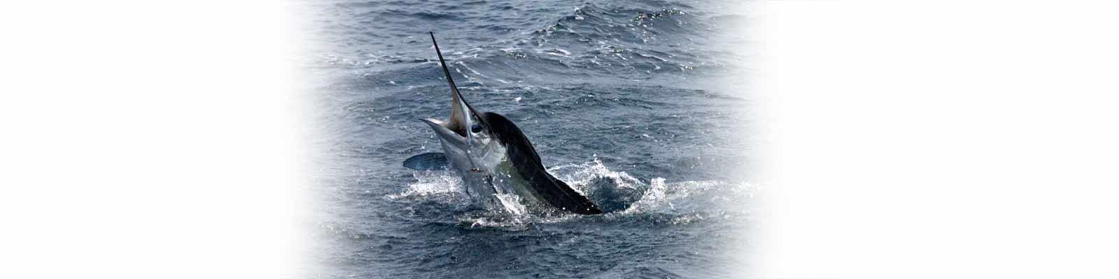 Virginia beach fishing charters aquaman sportfishing for Deep sea fishing va beach